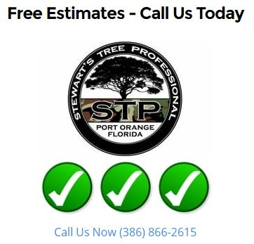 Free Tree Services Consutation in Volusia County