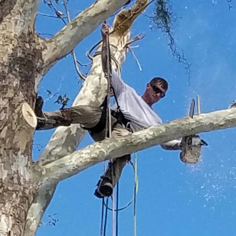 Zac from Stewart's Tree Pro trimming branches in Daytona Beach Florida