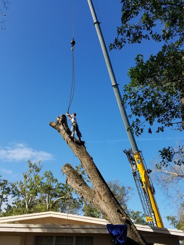 Crane work for a tree removal in Ormond Beach